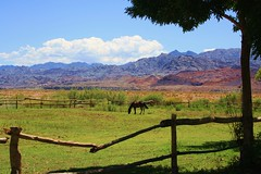 Tamberas (El caos de Urania) Tags: blue horse naturaleza verde green nature argentina landscape caballo rboles clauds sanjuan cielo nubes tranquera cerros montaas celeste tamberas