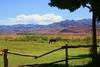 Tamberías (El caos de Urania) Tags: blue horse naturaleza verde green nature argentina landscape caballo árboles clauds sanjuan cielo nubes tranquera cerros montañas celeste tamberías