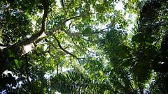 Amazon rainforest (sylviolin) Tags: trees peru nature forest amazon rainforest sony tropical nex
