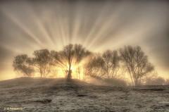 Sonnenaufgang bei Frost und Nebel ... Wisseler Dünen, Niederrhein (nigel_xf) Tags: wisselerdünen wissel kalkar kreiskleve nebel fog dunes niederrhein dünendorf binnendünen sonnenaufgang sunrise rays sonnenstrahlen foggy nebelig nikon d750 nigel nigelxf vsfototeam