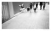 On the way (Ricardas Jarmalavicius) Tags: blackandwhite blackandwhitephotography blackwhite noiretblanc photography photographize photooftheday photographie photo iphoneography iphonephotography popphotocom popphoto eyephoto bestphoto mobilephotography streetphotography streetphotographer street straat dogs dog adorenoir candid girl barcelona people birds monochrome mobiography mobitog mobilemag shootermag hotshoe ricardasjarmalavicius jarmalavicius iphone5s 121clicks viewbug theappwhisperer travel flickr