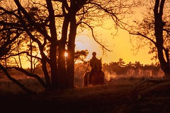 The horse out of the wood (marielledevalk) Tags: evening sunset sun light trees amazone forest wood horse tree plant sunlight nature holland dutch netherlands