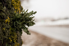 A Different Side of a Tree (modestmoze) Tags: tree city nature green yellow brown 2017 500px alytus lithuania street road macro close naturephotograph white sky blue snow winter cold january outside outdoors out explore growing growth side day view different unusual interesting