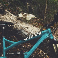 A close brush with death. (flipthomdotcom) Tags: yeti cycles yeticycles yetibikes mountainbikes