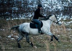 GrifGallops01312017-14 (liz-stout) Tags: gallop griffin horse