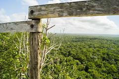 Mar Verde (sierramarcos14695) Tags: peten guatemala ladanta elmirador sony a58 explorando viaje travel mar verde arboles copas cielo nubes horizonte paisja paisaje nature naturaleza baranda selva priamide maya vista