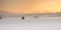 At the end of a day (hjuengst) Tags: bavaria dusk sunset snow winter orange white mist misty fog foggy chiemsee felden