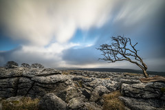 Windswept  [Explore - 21-01-17] (manphibian) Tags: twistleton scar end north yorkshire trees windswept limestone pavement sony sonya7 sonya7iilongexposure clouds sky skyporn cloudporn