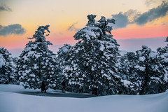 Winter afternoon on the mountain (Vagelis Pikoulas) Tags: winter january canon 6d tamron 70200mm vc trees snow kithairwnas kithaironas mountains mountain mount greece europe 2017 sun sky sunset