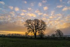 Sunrise (l4ts) Tags: landscape staffordshire peakdistrict whitepeak goldenhour sunrise trees drystonewalls farmbuildings silhouette sun alstonefield fields farmland cloudscape mist