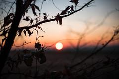 Distant light (Ir3nicus) Tags: nikond750 dslr fullframe germany deutschland outdoor bokeh sunset sun sunbokeh branches sky horizon afs50mm14g 50mm prime leaves