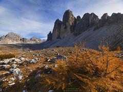 Tre cime in autunno N°6 (Bernhard_Thum) Tags: bernhardthum thum dreizinnen trecime autumn alps h5d60 hcd4824 nature velviavision elitephotography capturenature landscapesdreams