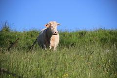 Simple et rustique. (Diké) Tags: de la des amour archives hommage amis campagne série moutons nos petit vaches chevaux prés saison rencontres rendu ânes estivale dikée