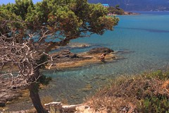 Flickr Kos Island (anthony.vairos) Tags: travel sea sun mer holiday hot tree water beautiful canon island eos turquoise kos grèce îles 700d