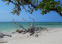 Santa Lucia - Cuba (aleta.weber) Tags: ocean blue summer tree beach landscape outdoor cuba mangrove caribbean kuba karibik
