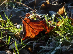 2016-12-27 Beaurepaire (83) (april-mo) Tags: leaves leaf feuille frosted frost gel deadleaves autumnleaves sunlight