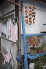 Autumn taste. Dried persimmon (mokuu) Tags: persimmon 柿 driedpersimmon 干し柿 laundry 洗濯物