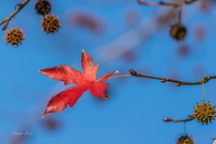 Autumn survivor (dave_poth) Tags: