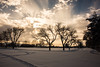 Sky Bloom (O.S. Fisher) Tags: 5d canon canon5dmarkiii markiii osfisher olivershaunfisher photo utah photograph photography shaunfisher snow trees kight couds sky brilliant tracks color