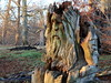 Old Stu seen at Dunham Massey NT, Metropolitan Borough of Trafford, Greater Manchester, England, UK (Andy_Hartley) Tags: oldstu dunhammasseynt metropolitanboroughoftrafford greatermanchester england uk carving sculpture wood canoneos7dmarkii efs1755mmf28isusm nationaltrust