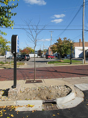 Not not a-atypical smalltown U.S. midwestern downtown scenery. (Tim Kiser) Tags: 2014 20141011 barrycounty barrycountymichigan churchstreet hastings hastingsmichigan hastingslandscape hastingsstreetscape img9100 michigan michiganlandscape northchurchstreet october october2014 autumnlandscape brickpavement brickpaving brickstreet centralbusinessdistrict deadleaves differentkindsofpavement dirt downtown downtownhastings downtownstreetscape electriclines electricpoles falllandscape fallenleaves flowerbedwithoutflowers gravel gravelbed landscape landscaping overheadelectriclines overheadpowerlines paved pavement powerlines sidewalk sidewalklandscaping sidewalktree sign signbed skinnytree skinnyyoungtree southmichigan southernmichigan southwestmichigan southwesternmichigan stormdrain stormdraingrate stormsewer streetlandscaping streettree streetscape sunny telephonepoles urbanlandscape utilitypoles view westmichigan westernmichigan youngskinnytree youngtree unitedstates