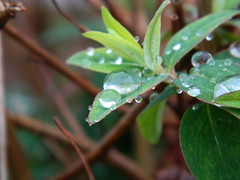 Walking in my Garden (evb_photography) Tags: photography photo photographs photooftheday photographer photograph nature follow me plant plants water rain waterdroplet waterdroplets grass garden walk walking tree chrsitmas bored cold