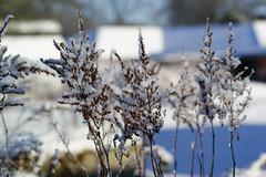 A little bit of snow (Steenjep) Tags: vinter winter jylland danmark denmark sne snow herning dof sun sol reflex refleks depthoffield depthoffocus