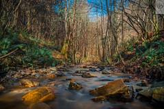 Stream (dbeni91) Tags: stream river riachuelo bizkaia long exposure silk basquecountry spain