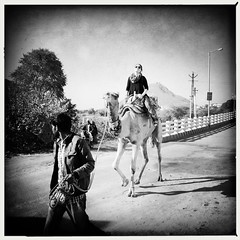 Rajasthani series (Nick Kenrick..) Tags: camel india rajasthan pushkar hindu hipstamatic