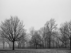 2.7.2017 A walk in the park (Kristine Runner) Tags: lakepark milwaukeecountypark fog