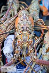 IMG_4298 (Max Kehrli) Tags: waves tournament lobster bermuda annual makin 2014 makinwaves