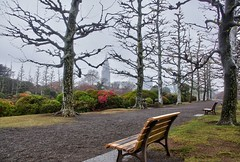 French  Style garden in Shinjuku Gyoen, Tokyo (Tatters ) Tags: trees japan garden bench tokyo shinjuku gallery presentation shinjukugyoen shinjukugyoennationalgarden gyoennationalgarden