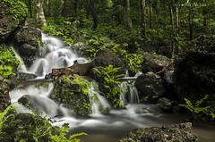 A small stream in the western ghats (AkDExplorer) Tags: india nikon monsoon western karnataka ghats remoteshutter sirsi gorillapod d5100