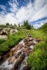 Streaming Down (Derek Cronk) Tags: mountains nature movement colorado stream wildflowers cascade