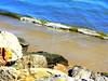Low Tide Time (dimaruss34) Tags: newyork brooklyn dmitriyfomenko image manhattanbeach jetty horizon sea tide