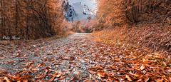Vers une fin d'automne (Didier HEROUX) Tags: automne autumn forêt forest balade rando aravis paysage landscape alpes alpi alps alpen couleurs fin sentier feuille didierheroux herouxdidier hautesavoie france french massif alpesdunord 74 flickr orange feuillesmortes saison raw leica panasonic montagne mountains allée