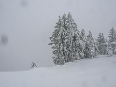 PC040644-1-1 (Camera Bread) Tags: olympus olympusomdem5 omdem5 omd em5 14150mm 14150mmii 14150mmiif4056 olympus14150mmii mzuiko14150mmiif456 mzuiko craterlake craterlakenationalpark oregon pnw winter wintertime winterhiking hikinginwinter frozen