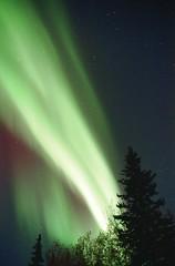 Bright Band (film) (northern_nights) Tags: northernlights film aurora auroraborealis nikonfm2 nikkor35mmf14 fairbanks alaska 100v10f