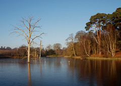 2016_12_0600 (petermit2) Tags: clumberpark clumber sherwoodforest sherwood nottinghamshire nationaltrust nt