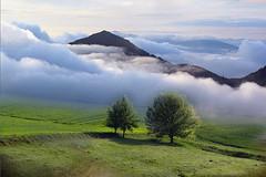 montagna (Zz manipulation) Tags: art ambrosioni zz manipulation natura mattino nebbia montagna alberi paesaggio contry landscape