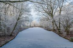 Rijp in Leiderdorp (18/01/17) (Patrick Herzberg) Tags: landschap leiderdorp nederland tamron tamron18270mm winter bomen d5200 houtkamp nikon park rijp wit