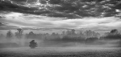 Misty Morning (londonlass16) Tags: grandunioncanal grove londonscountryestate mist hotel blackandwhite monochrome misty morning outdoor land sky cloud lonetree landscape weather drama dramatic atmosphere atmospheric