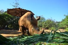 WKK_2942 (kongkham35@hotmail.com) Tags: nikond7000 nikon1685 nakhonratchasimazoo nakhonratchasima thailand