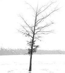 Saved (Carlos Lacano) Tags: tree bw nature high key bevertal fuji xt1 carlos lacano germany