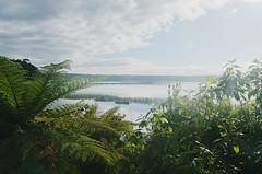 balcony among the ferns. Lake Mahinapua (Le Fabuleux Destin d'Amélie) Tags: hokitika lakemahinapua mahinapua fern westcoast lake morning newzealand summer roadtrip doc campsite