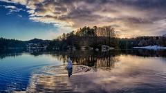 """Still looking"", Norway (Vest der ute) Tags: g7x norway rogaland haugesund eivindsvatnet water waterscape reflections clouds sky swan trees fav25 fav200"