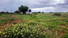 Wüstenblumen