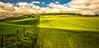 Blowin' free , like a cornfield. (AlbOst) Tags: summer green lines clouds landscapes countryside fences highlights farmland fields crops fenceposts lightandshade wonderfulworld greenbeautyforlife