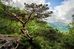 Glen Nevis (Bob03C) Tags: montagne fujifilm arbre ecosse glennevis xt10 ortoneffect