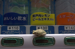 Frog on vending machine